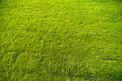 Bright Green grass background texture. Royalty Free Stock Image