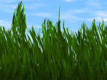 Bright green grass on a blue sky backgrounds Royalty Free Stock Photography