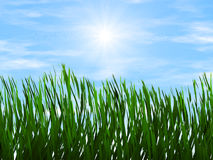 Bright green grass on a blue sky sunbeam backgrounds Royalty Free Stock Image