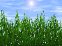 Bright green grass on a blue sky sunbeam backgrounds Royalty Free Stock Photo