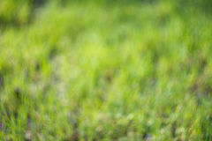Bright green grass blurry background. With unusual swirly bokeh Stock Photography