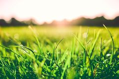 Bright green grass close-up with sunlight reflecting on a blurred background of hills.  Royalty Free Stock Photo