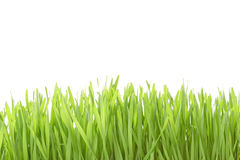 Bright green grass isolated Stock Images