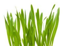 Bright green grass Royalty Free Stock Photos