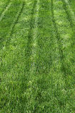 Bright Green Grass Lawn Stock Photo