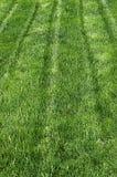 Bright Green Grass Lawn Stock Photo