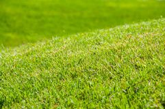 Bright green grass on a lawn in the summer. The sun is shining. stock photography