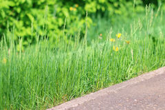 Bright green grass near border on path. Bright fresh green grass near border on path in summer park, close up view Royalty Free Stock Images