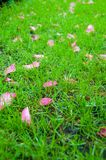 Bright green grass with pink flower petals. Nature background Royalty Free Stock Image