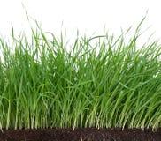 Bright green grass Stock Photos