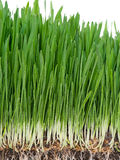 Bright green grass Stock Photography