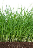 Bright green grass Royalty Free Stock Photos