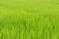 Bright Green Grass Stock Images