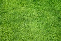 Bright green grass texture Royalty Free Stock Photos