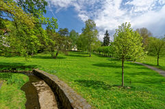 Bright green grass and trees Stock Image