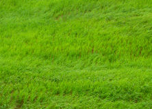 Bright green grasses blowing in the field Stock Photos