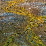 Bright Green Grasses Line Streams. On Mt. Rainier royalty free stock photography