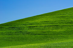 Bright green grassy field with blue sky Stock Photo
