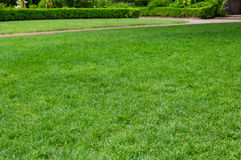 Bright green grassy lawn in a garden Stock Images