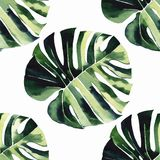 Bright green herbal tropical wonderful hawaii floral summer pattern of a tropic monstera palm leaves. Watercolor hand illustration. Perfect for textile royalty free illustration