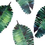 Bright green herbal tropical wonderful hawaii floral summer pattern of a tropic monstera palm leaves watercolor Stock Images