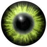 Bright green human  eye with middle pupil and dark retina. Dark colorful iris around pupil, detail view into eye bulb. Stock Photos