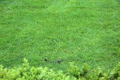 Bright green lawn Stock Photos