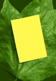 Bright green leaf ad frame. Yellow card on bright green leaf for your Spring message Stock Images