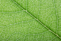 Bright green leaf background Stock Photos