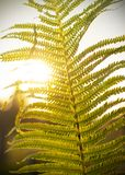 Fern leaves in the sun. The natural background stock image