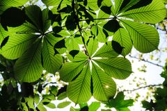 Bright green leafs. Green leafs with sharp details stock photo
