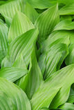 Bright green leaves Stock Images