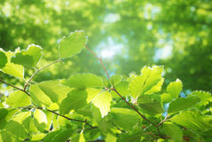 Bright green leaves Stock Photos