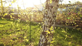 Bright green leaves of birch. Slow motion Full HD stock video footage