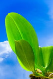 Bright green leaves on blue sky Royalty Free Stock Images