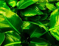 Bright green leaves n royalty free stock photo