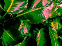 Bright green leaves n stock images