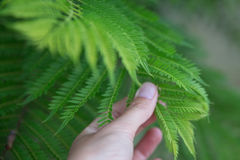 Bright green leaves with hand. Selective soft focuse and boke on background Royalty Free Stock Images