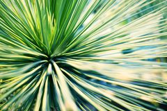 Bright green leaves of palm tree or ornamental houseplant blurred background closeup macro royalty free stock photos