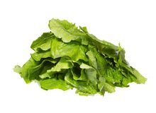 Bright green leaves of salad in one pile. stock image