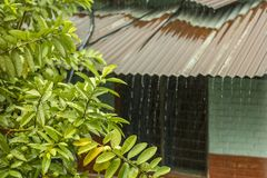 A bright green leaves on a tree branch against the roof of a brick house during the rain. jets of water during rain stock image