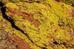 Bright green lichen on red granite. Bright green lichen grows in irregular patches on red granite stock photo