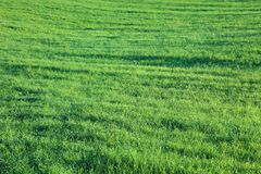Bright green meadow. Stock Photography