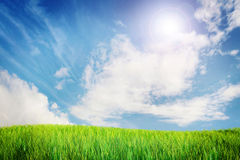 Bright green meadow and blue sky Stock Photos