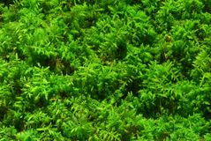 Bright Green Moss Stock Photos