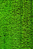 Bright green moss Royalty Free Stock Photos