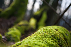Bright green moss close-up Royalty Free Stock Photos