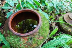 Bright green moss and fern growing on earthen jar in the garden. Select focus.  stock photos