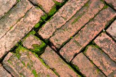 Bright green moss growing on brick surface old red block paving stock photo