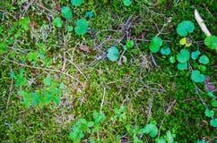 Bright green moss macro shot Stock Images